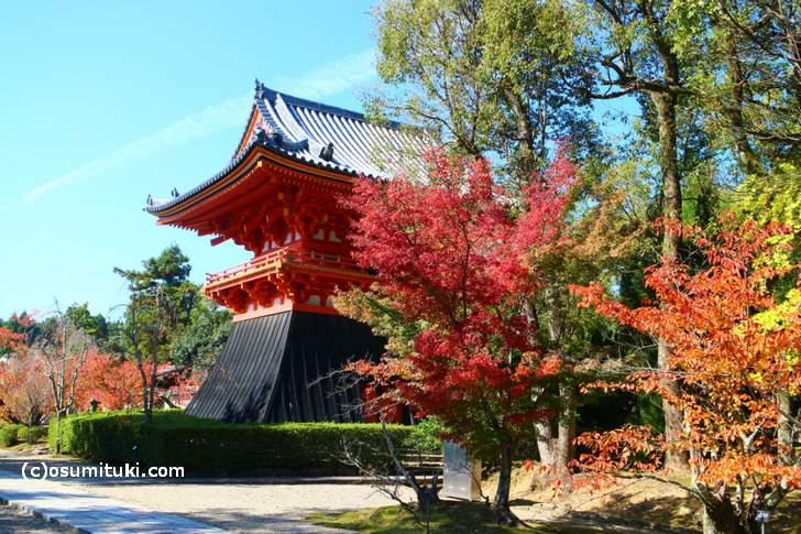 仁和寺で紅葉が美しい場所(2017年11月2日撮影)