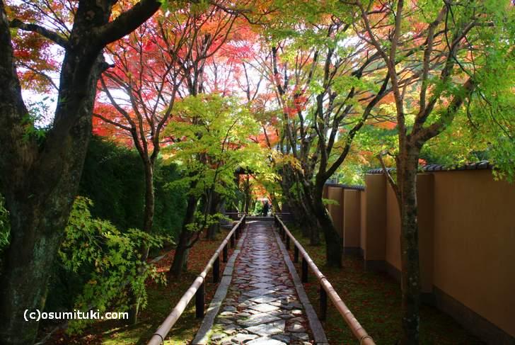 光悦寺 入口から見た紅葉(2017年11月9日撮影)