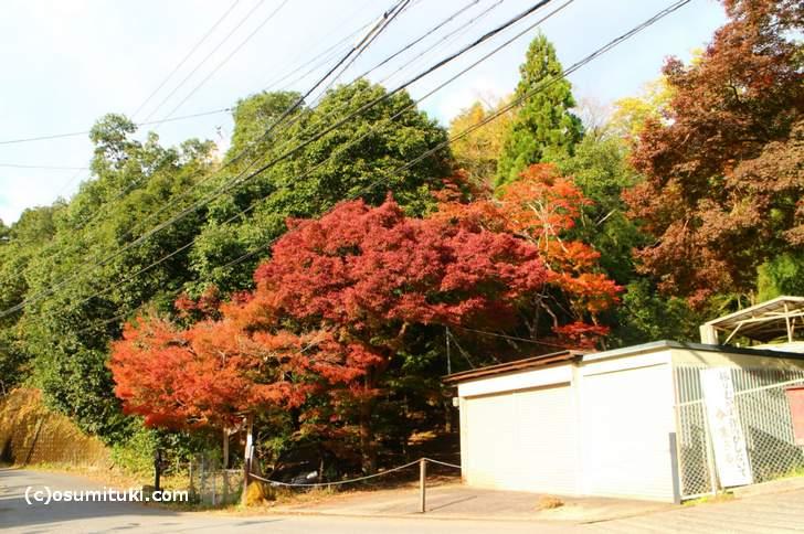 京都・鷹峯「大徳寺讃州寺の紅葉」(2017年11月9日撮影)