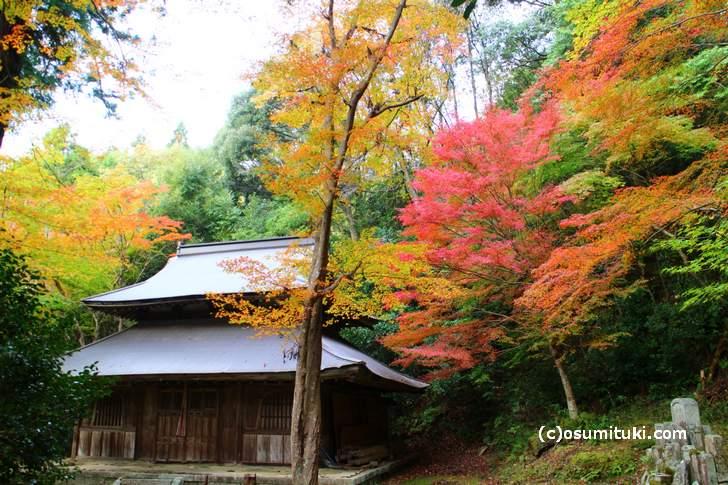 大徳寺讃州寺の紅葉(2017年11月9日撮影)