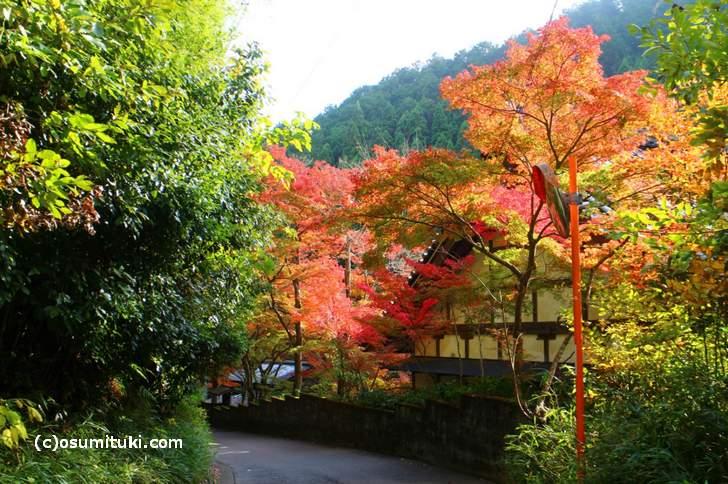 京都・鷹峯「吟松寺の紅葉」(2017年11月9日撮影)