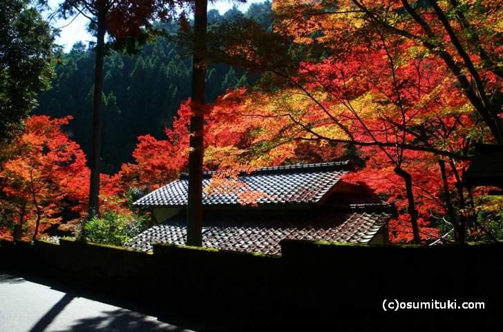 京都・鷹峯「吟松寺の紅葉」(2017年11月10日撮影)