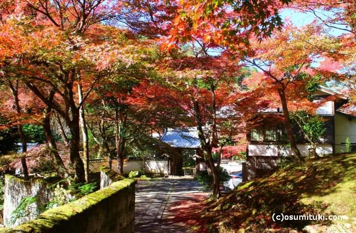 拝観はできませんが、前の道から見る紅葉が一番キレイです