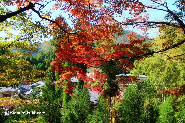 大徳寺讃州寺の紅葉(2017年11月10日撮影)