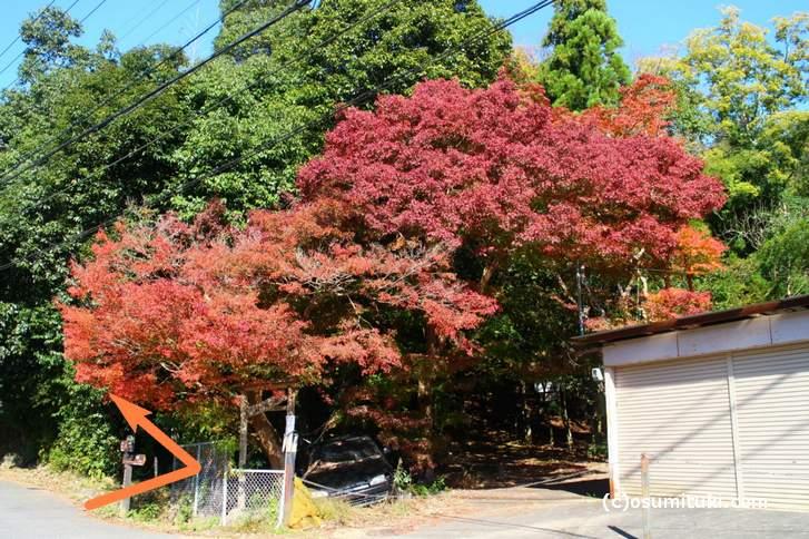 大徳寺讃州寺への入り方