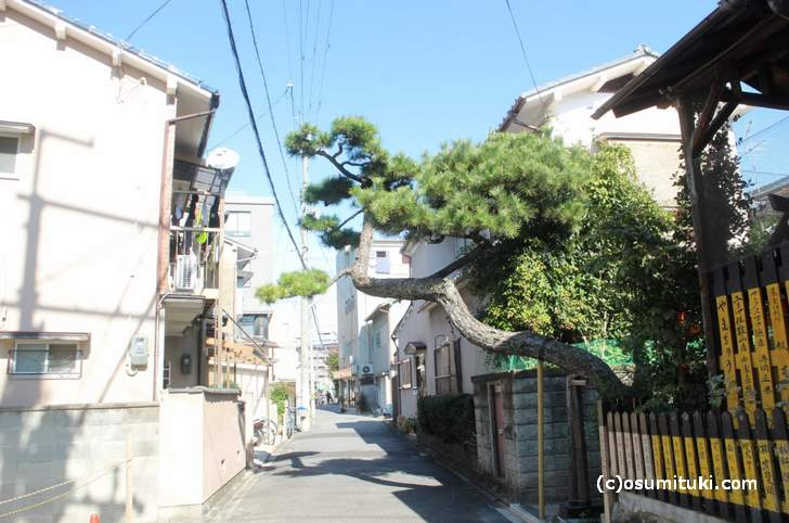 京都の裏道にドーンと出てきている松の所に小さい神社があります