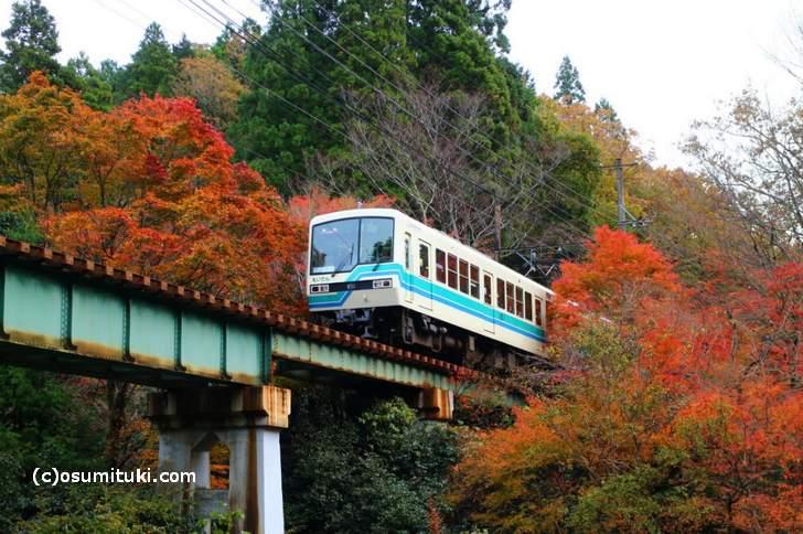 叡電・紅葉トンネルの紅葉写真