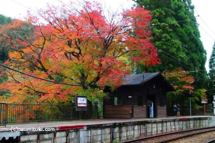 二ノ瀬駅と叡電の紅葉写真