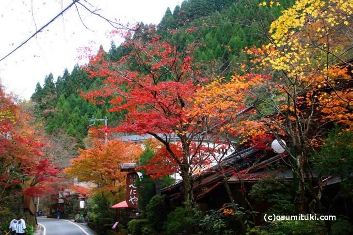 2017年の京都・紅葉は例年より落ちます(写真は貴船)