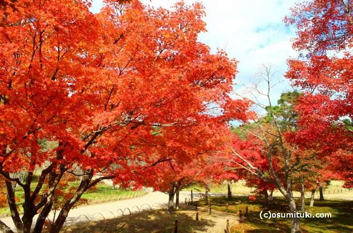京都で唯一空いている紅葉スポット