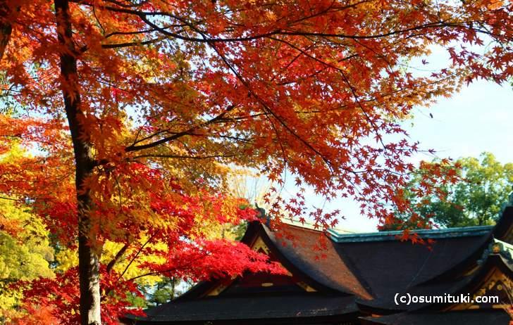 本殿展望所から見た紅葉
