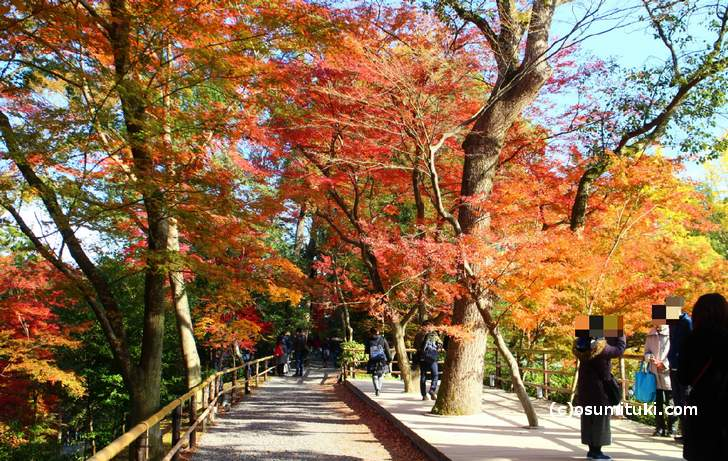 北野天満宮の紅葉が11月25日放送『もしもツアーズ』で紹介