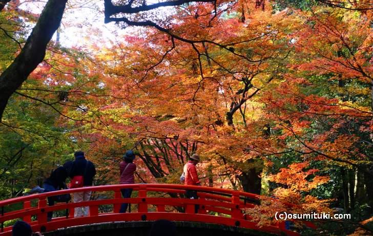 京都の紅葉はもう終盤です