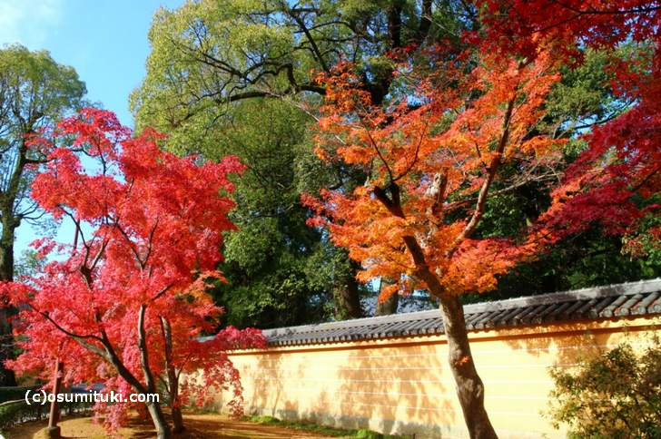 2017年 京都・金閣寺「秋の紅葉ピーク時」
