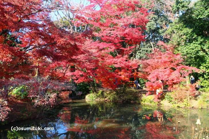 園内は池のあるエリアに紅葉がたくさんあります