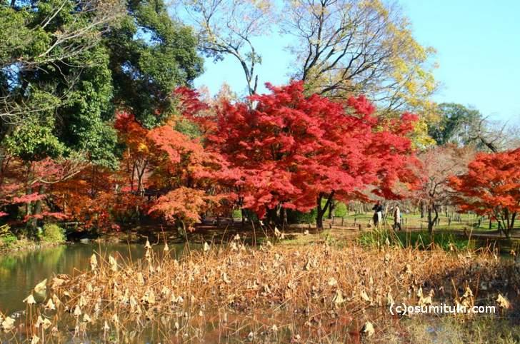 半木神社付近の紅葉(1)