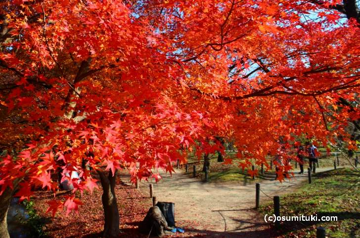 半木神社付近の紅葉(3)