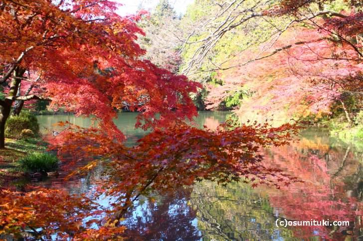 京都府立植物園の紅葉ピークは11月23日頃からです