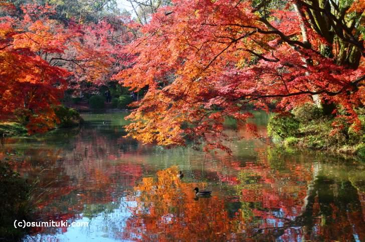半木神社付近の紅葉(4)