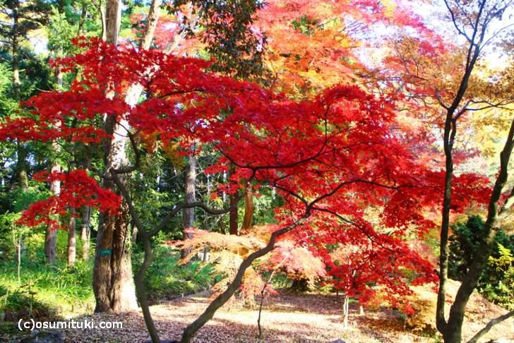 植物生態園付近の紅葉(1)