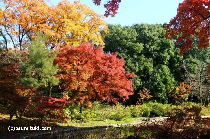 植物生態園付近の紅葉(2)