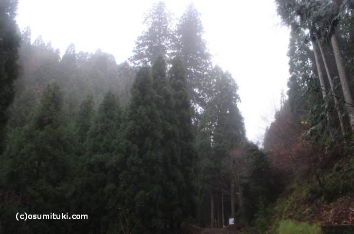 花脊の三本杉へ行くのはかなり大変です