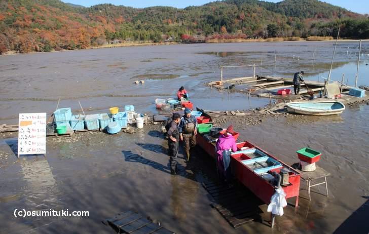 京都・広沢池で毎年行われる「鯉揚げ」