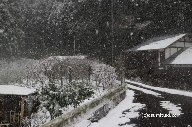 雲ケ畑は雪の降り方が違います(2017年1月14日撮影)