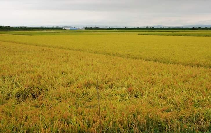 今回の舞台「登米市」の田園風景