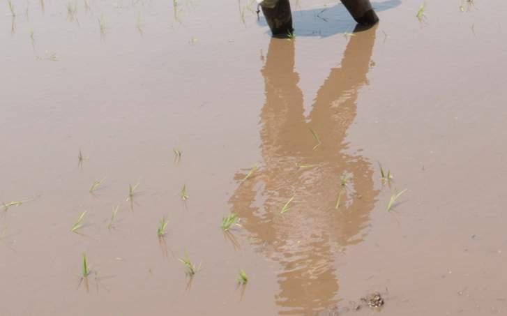 畑が水びたしになると根菜類は全滅します