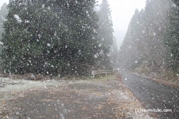 さらに北を目指しましたが雪が凄すぎて進めませんでした