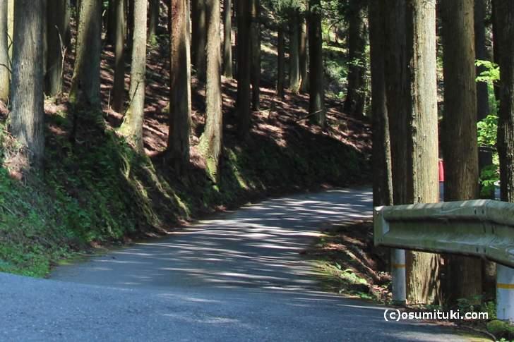道幅は車一台分くらい(京都市左京区百井別れ、国道477号)