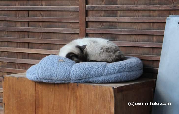神社の飼い猫です