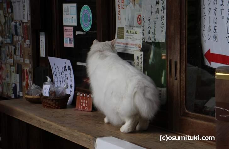 社務所をのぞき込む猫