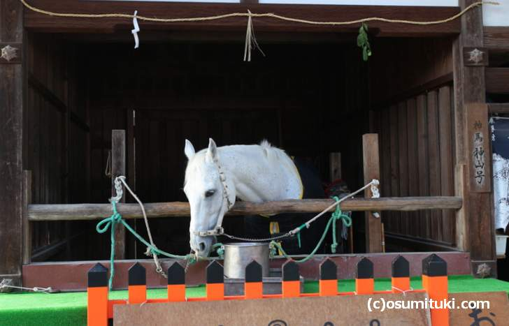 正月三が日には白馬もお披露目されます