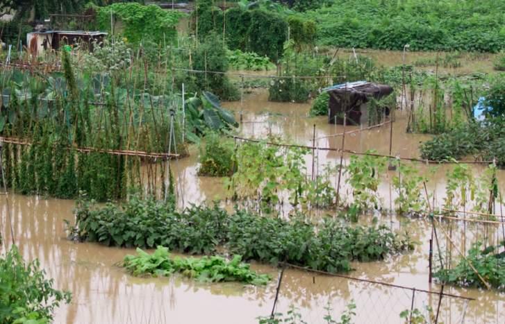 不足の原因は、長雨によって収穫できないところに台風が来たこと
