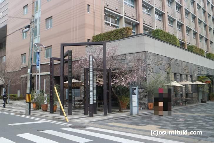 御池桜は京都御池創生館前にある桜です(2018年1月19日撮影)