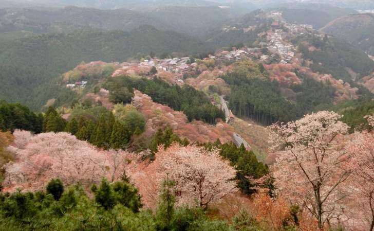 吉野と言えば奈良ですが、京都にその名を名乗る「吉野丼」がある