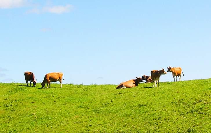 グラスフェッドバターとは牧草で育った牛乳のバターのことです