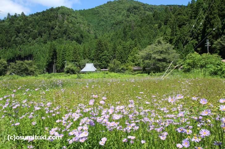 久多(くた)は空気と水がおいしい「自然豊か」な場所です
