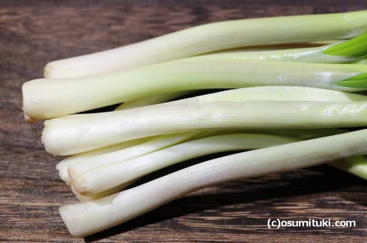 冬の伝統野菜「ひろっこ」は雪の下から掘り起こす「雪の下野菜」です