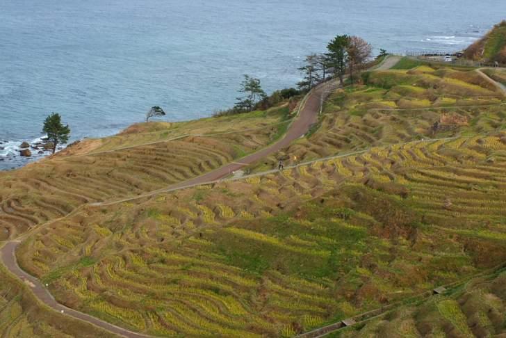 石川県能登半島(写真は白米千枚田)