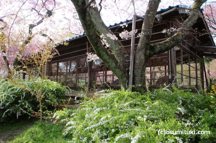 桜を眺めながら予約制の席で「すき焼き」や「懐石弁当」を食べることもできます