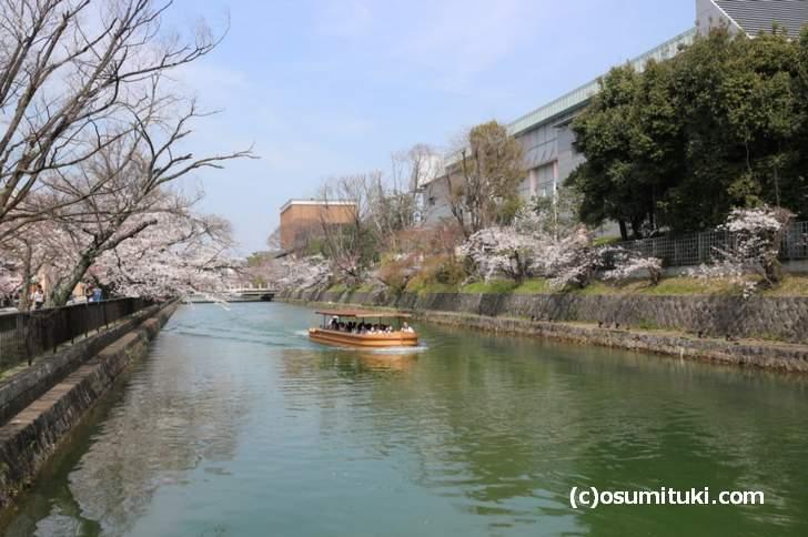 「みやこめっせ」側の疎水桜は、まだ咲いていない枝がありました(2018年3月27日)