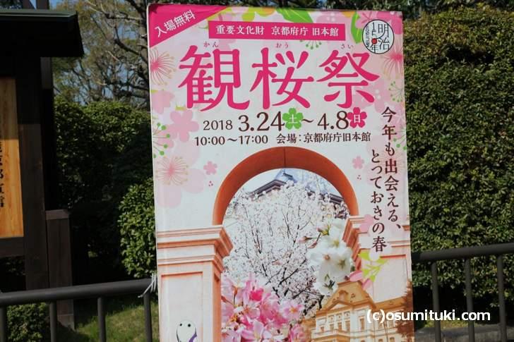 京都府庁 旧本館で開催中の「観桜祭(かんおうさい)」の桜を見に来ました