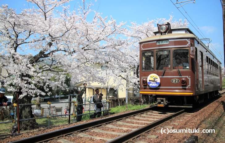 桜のトンネル 南側から撮影した桜のトンネルと嵐電(2018年3月28日撮影)