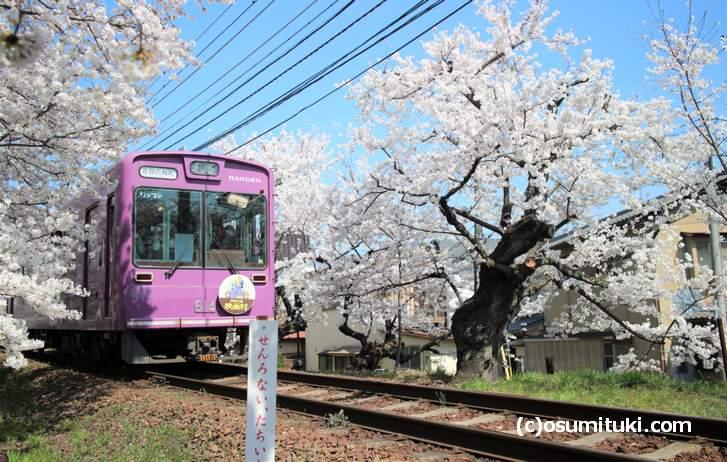 桜のトンネル 北側から撮影した桜のトンネルと嵐電(2018年3月28日撮影)