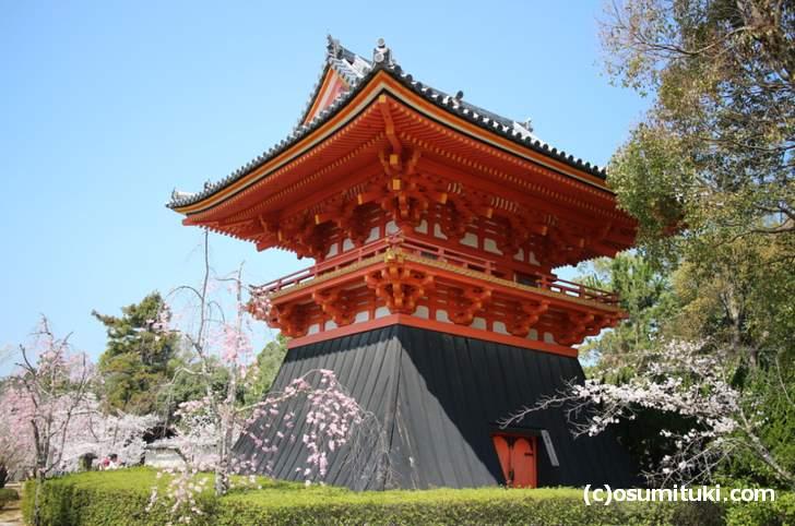 仁和寺の八重紅枝垂桜、ピンク色の花で満開でした(2018年3月28日)
