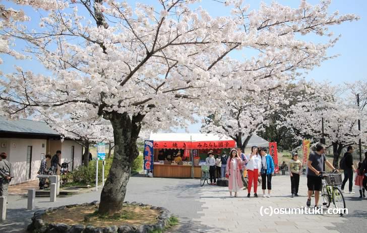 嵐山の桜はどこも満開でした(2018年3月29日撮影)
