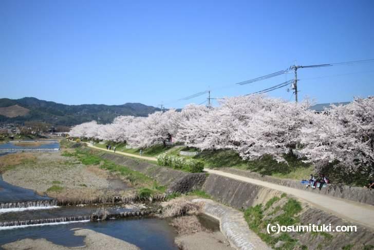 半木の道~鴨川上流の桜 2018年桜の開花情報まとめ